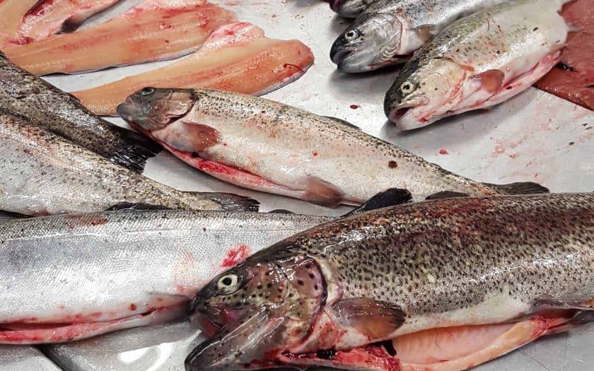 Fisch aus Aquakultur – eine (Not)-Lösung?