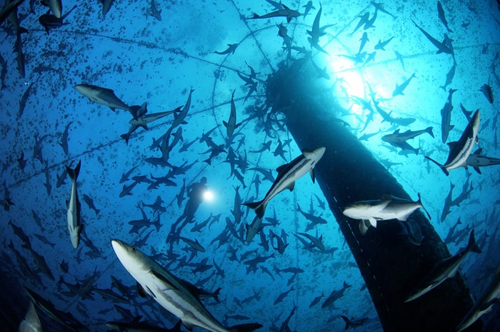 Die Zukunft der marinen Aquakultur (c)Brian Skerry, Open Blue