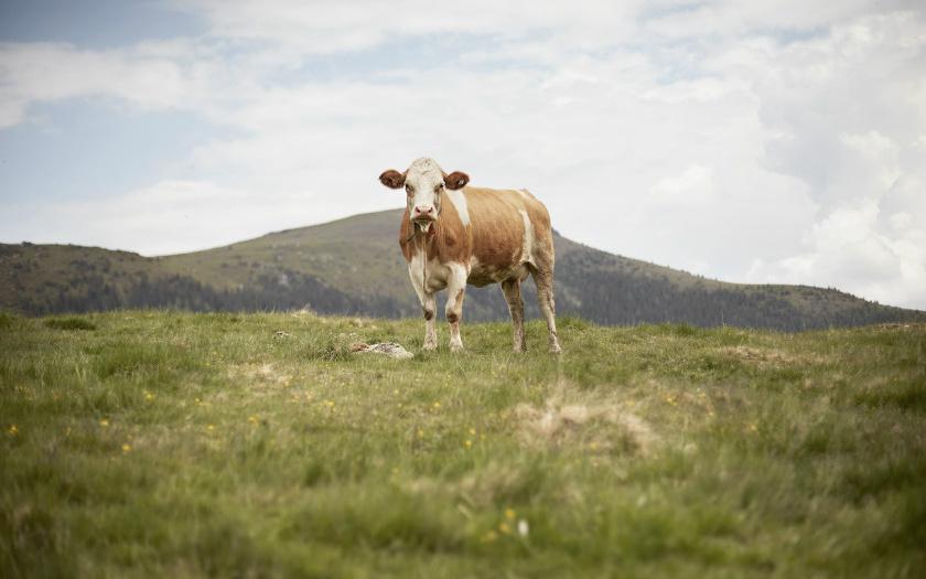 Bestes aus den Alpen: Steierisches Almrind
